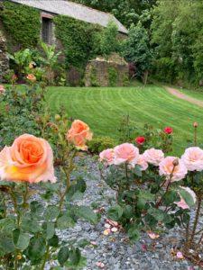 Roses at Trelonk Farm